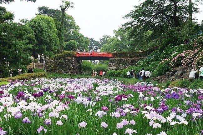 เทศกาลดอกไฮเดรนเยีย