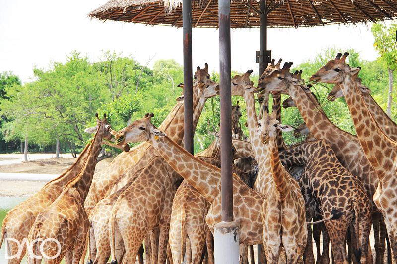 Safari World ซาฟารีเวิลด์