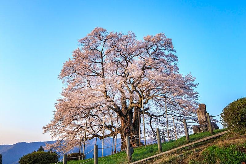 Before our spring 10 จุดน่าไปยามเมื่อดอกไม้บาน โอคายาม่า
