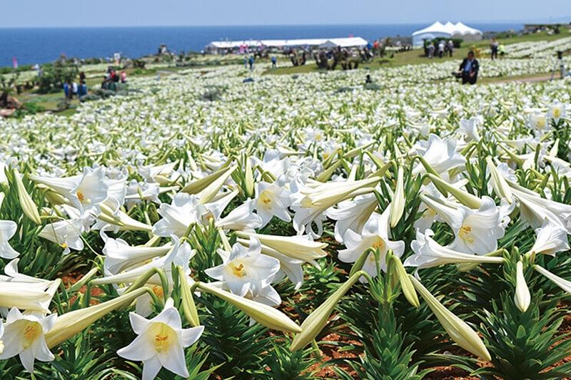 Before our spring 10 จุดน่าไปยามเมื่อดอกไม้บาน โอกินาวะ