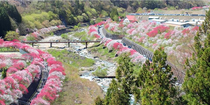 Before our spring 10 จุดน่าไปยามเมื่อดอกไม้บาน นากาโนะ