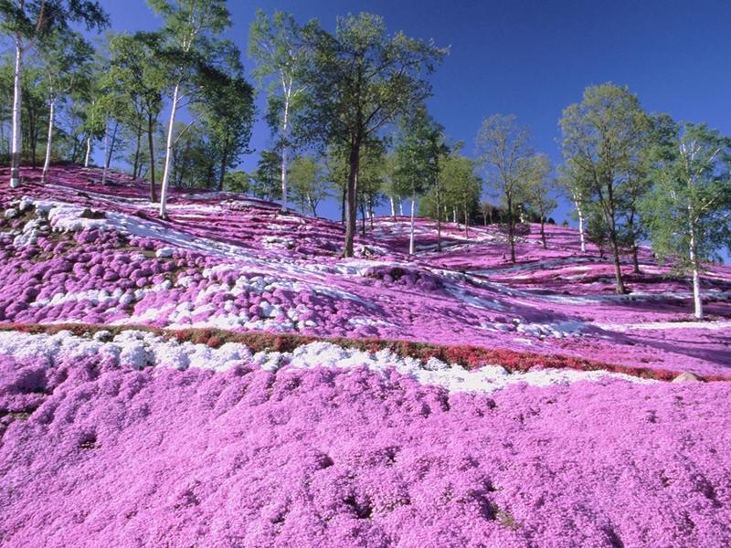 Before our spring 10 จุดน่าไปยามเมื่อดอกไม้บาน ฮอกไกโด