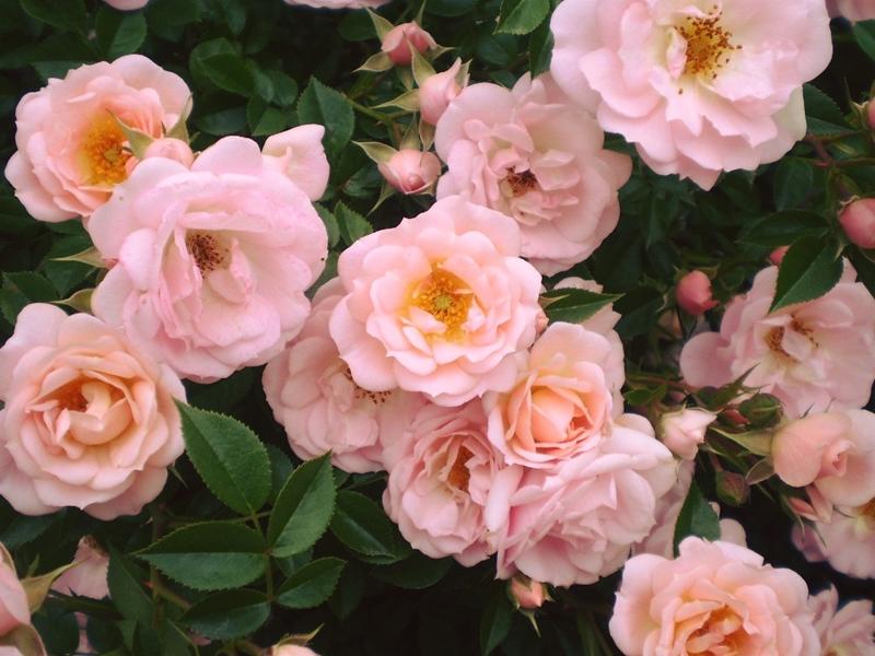 Before our spring 10 จุดน่าไปยามเมื่อดอกไม้บาน กิฟุ