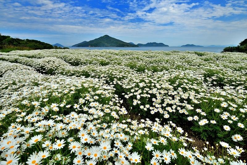 Before our spring 10 จุดน่าไปยามเมื่อดอกไม้บาน คากาวะ