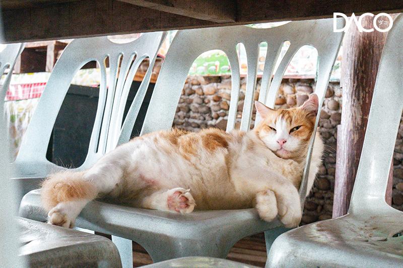 ภูเก็ต เกาะไข่ เกาะแมว phuket Koh Khai